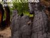 Drzewa z Klimatem - aplikacja mobilna