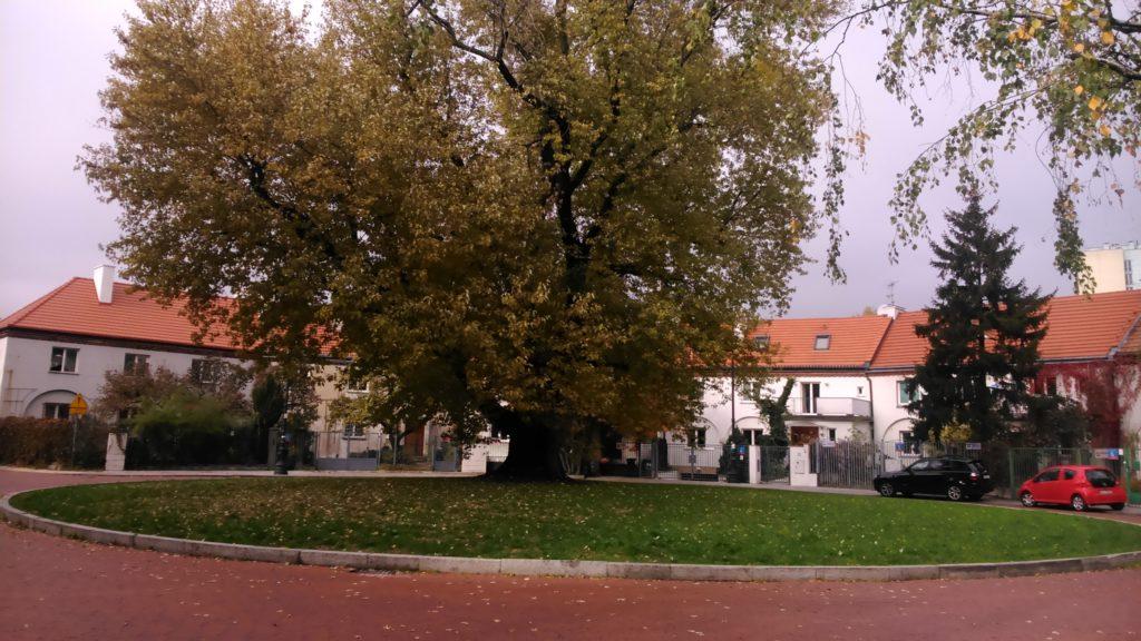 Drzewo Czasu