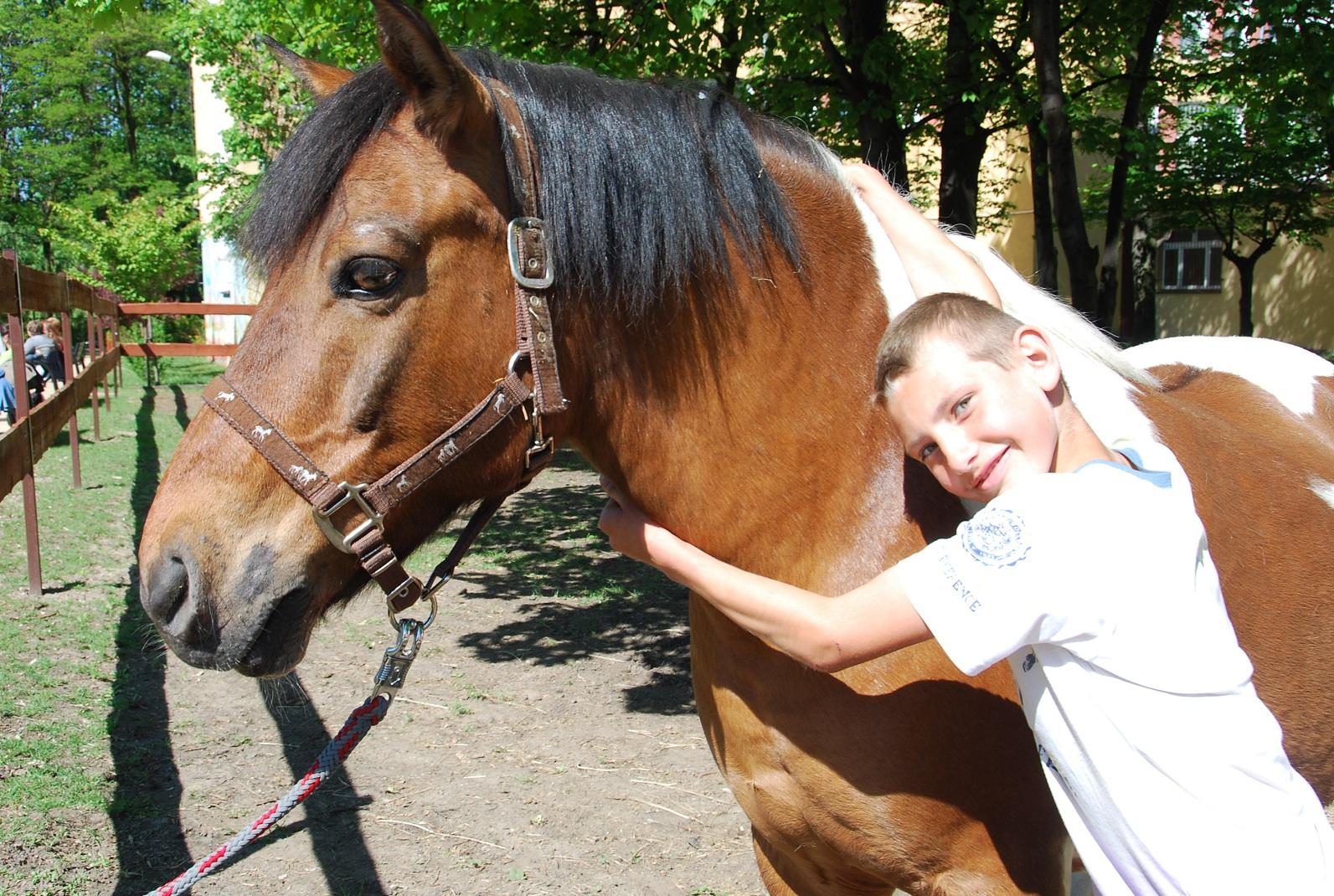 Atlantyk - koń terapeuta