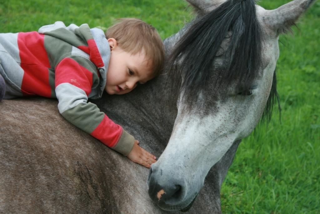 Feta - koń terapeuta
