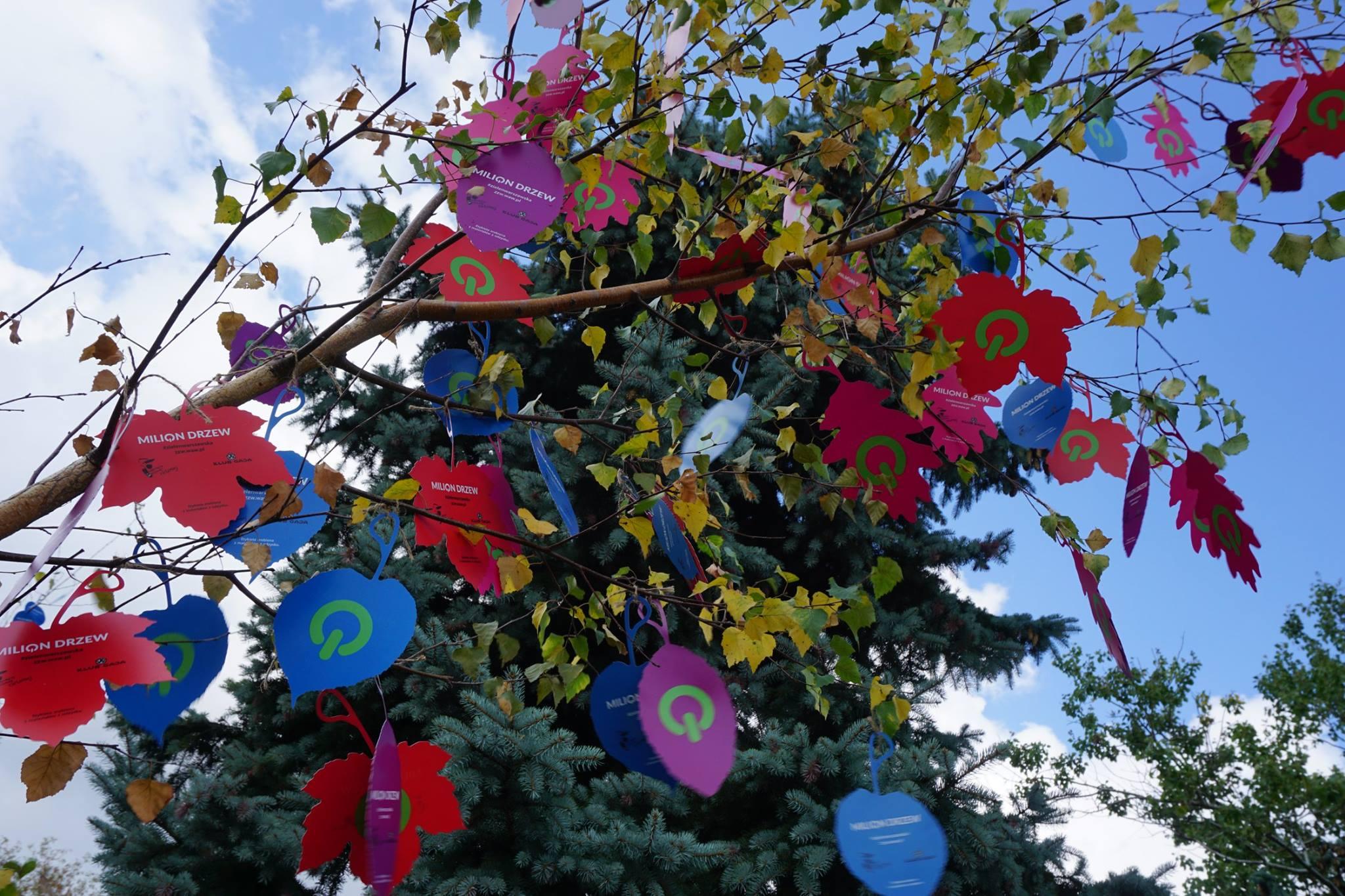 milion_drzew (2)