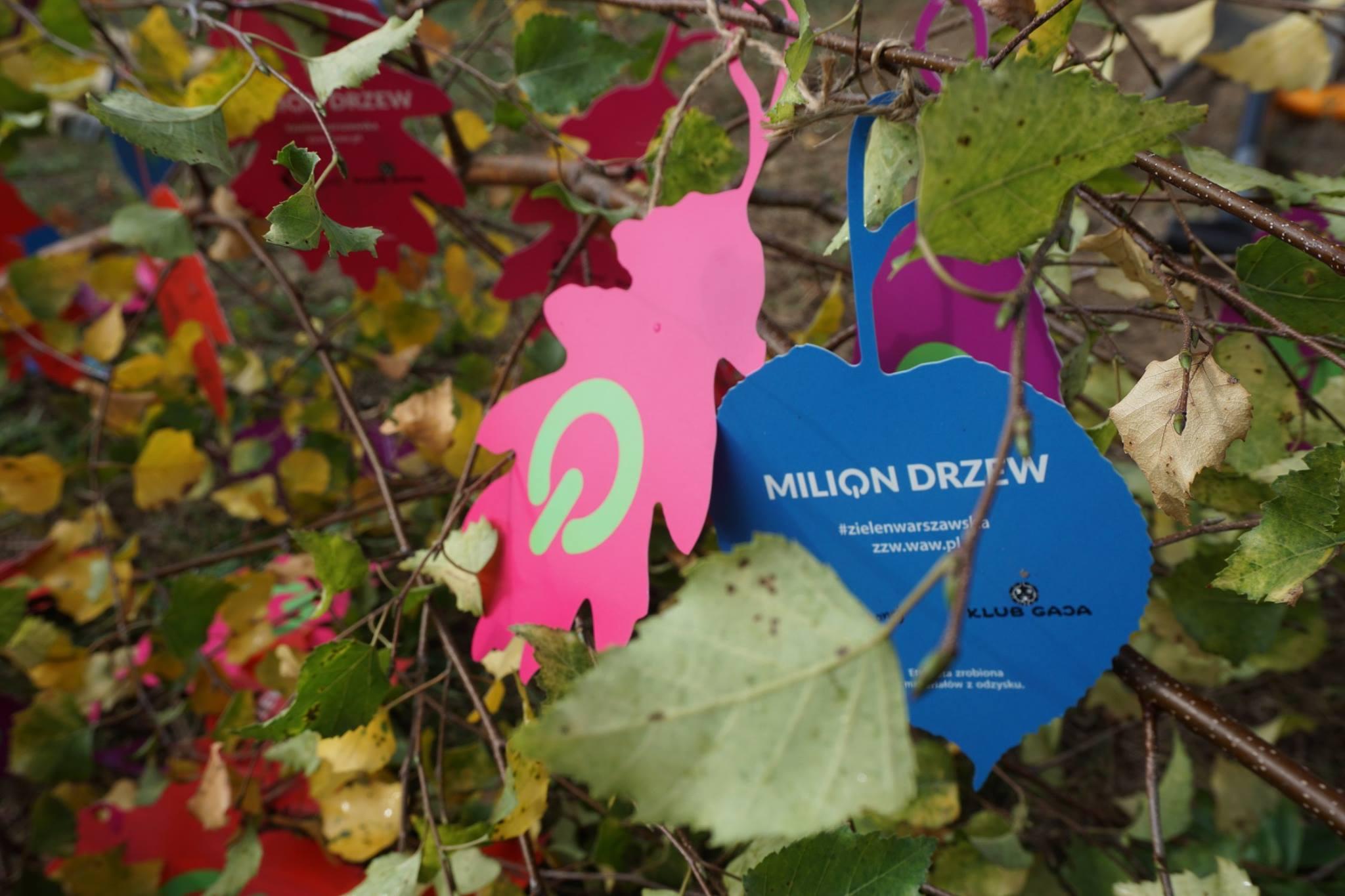 milion_drzew (7)
