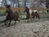 Parkur i Atlantyk - terapeuci z ZSS nr 4 w Sosnowcu, konie Klubu Gaja :)