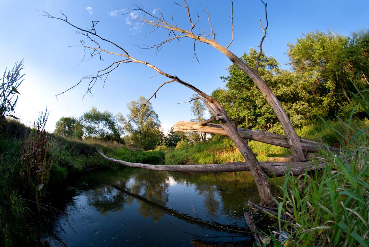Drzewa nad rzeką Wilgą, fot. Klub Gaja/Tomek Pikuła