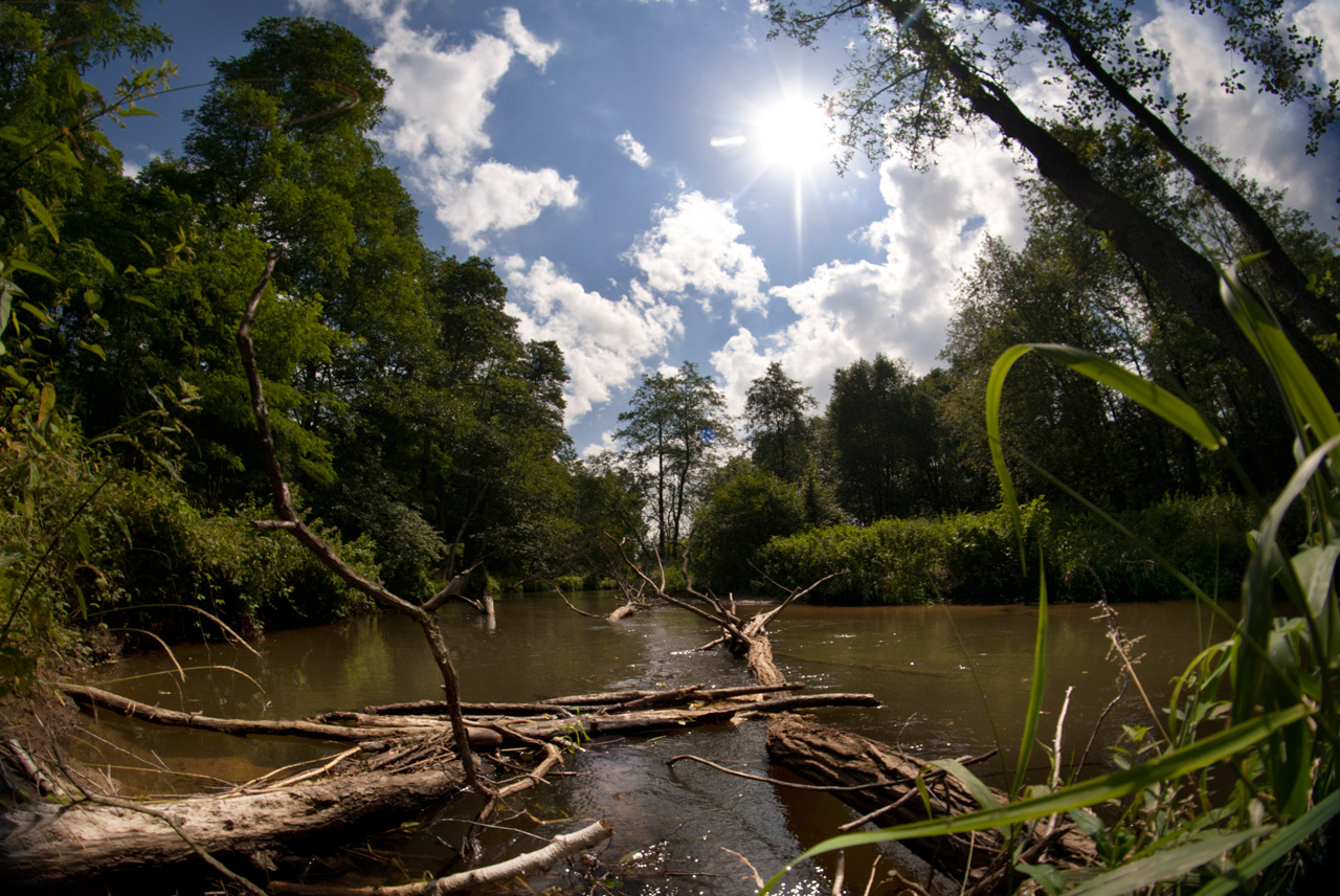 Drzewa w rzece Rawka, fot. Klub Gaja/Tomek Pikuła