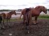 Pierwsze chwile - ogromne zdziwienie - skąd tyle koni i takie małe?
