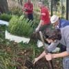 sadzenie lasu Jaworze 055