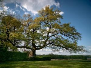 drzewo roku 2014