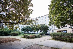 Drzewa przy Marszałkowskiej