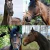 Konie uratowane w 2014 roku