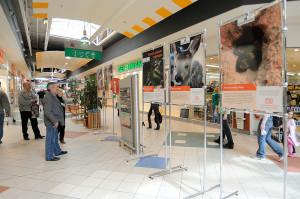 """Wystawa """"Pomóż ratować zwierzęta"""" w hipermarkecie Auchan w Bielsku-Białej"""