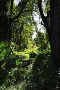 Dżungla afrykańska.