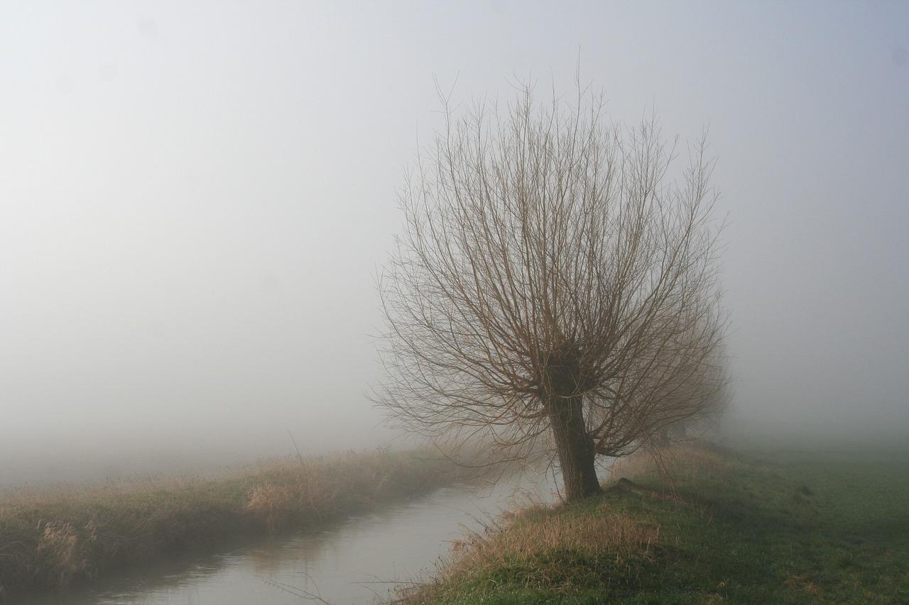 Wierzba krucha. Fot. www.pixabay.com