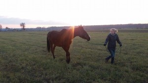 Norman z Panią Aleksandrą - fizjoterapeutką koni.