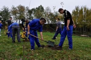 Sadzenie zadrzewień przydrożnych w Parku Historii we Włodzieninie.