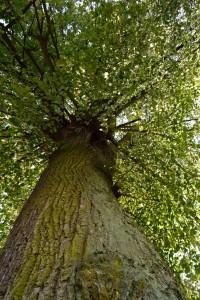 11_drzewo_mrozek
