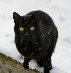 cat-141203_1280