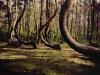 Krzywy Las – Nowe Czarnowo ( woj. zachodniopomorskie)