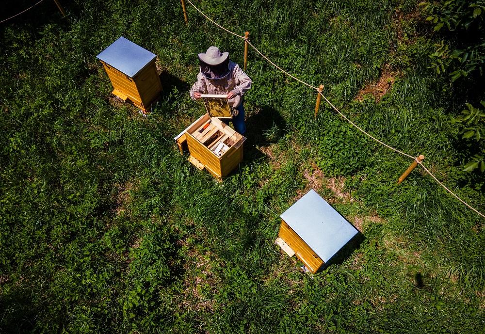 spokoj-pszczoly-9