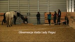 """Pegaz i White Lady """"badają"""" stado"""